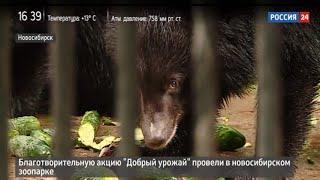 Горожане в ходе акции «Добрый урожай» накормили животных новосибирского зоопарка