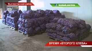 """Время """"второго хлеба"""": уборка картофеля в Высокогорском районе 08/09/18 ТНВ"""