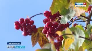 Сухо и весьма тепло для середины октября будет в предстоящие выходные