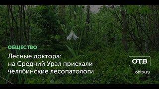 Лесные доктора: на Средний Урал приехали челябинские лесопатологи