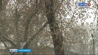 Синоптики прогнозируют возвращение штормового ветра в Новосибирскую область к среде