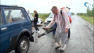 В Волотовском районе снят карантин по африканской чуме свиней