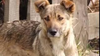 Бездомные собаки держат в страхе жителей частного сектора
