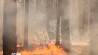 Более 500 млн рублей ущерба нанесли пожары лесному фонду ЕАО(РИА Биробиджан)