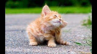 РЖАЧНЫЕ ПРИКОЛЫ с животными самое смешное про котов и кошек 2018 #14 (Убойно и весело)