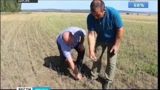 Режим ЧС из за засухи отменили в Усольском и Боханском районах