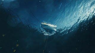 Ученые ЕС берут энергию моря и обогревают города опилками…