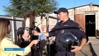 Энгельсские полицейские показали своих лошадей