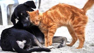 В Белоярском строят приют для животных
