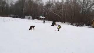Собаки задержали террористов в Комсомольске-на-Амуре