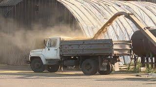 В Большеигнатовском районе уборка зерновых культур на завершающей стадии