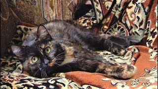 Кошка-черепаха из Ханты-Мансийска принесет в ваш дом богатство