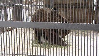 Знаменитые югорские медведи из Шапши оказались придирчивы к выбору кровати для спячки