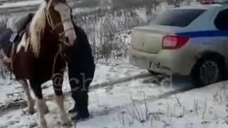 Полицейские и хвост лошади!