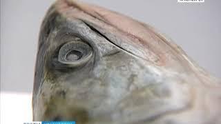 Самая полезная рыба в мире живет в северных водах Красноярского края