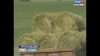 В хозяйствах Чувашии полным ходом идёт заготовка кормов