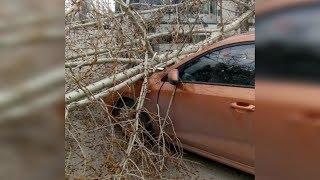 Сильный ветер, бушевавший накануне в Уфе, стал причиной более 50 ЧП