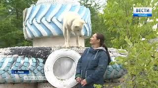 Кедровую усадьбу в Лазовском районе охраняют белый волк и пулемет «Максим»