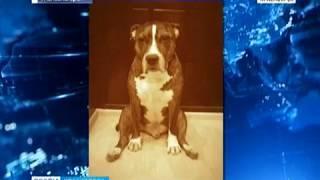 В Железногорске мужчина зарезал собаку на глазах хозяйки