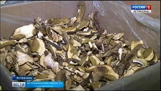 Астраханцам представили большой ассортимент грибных деликатесов