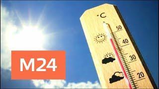Синоптики пообещали до +19 градусов к концу недели - Москва 24