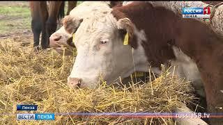 Пензенские аграрии намерены сохранить лидирующие позиции в Поволжье