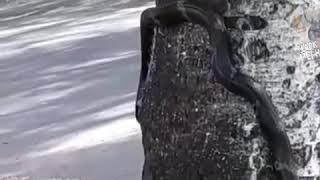 Змея во дворе жилого дома в Уссурийске