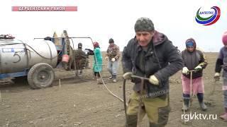 В этом году в Дагестане планируют посадить 1500 гектаров виноградников