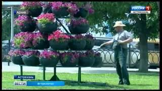 В Астрахани на площади Ленина появится живая изгородь из барбариса