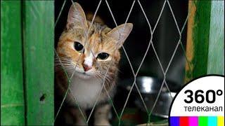 В Балашихе разгорелась война из-за заточенных в подвале котов