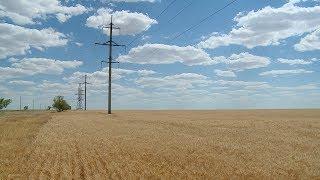Как повлияет засуха на урожай волгоградского зерна в этом году?