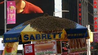 Таймс-сквер перекрыли из-за пчёл