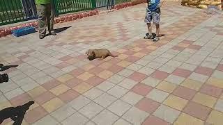 Львёнок и оленёнок родились в зоопарке Ставрополя