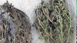 Полиция изъяла у мужчины более 2 кг наркотиков