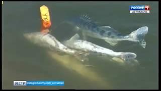 """Ведущий постоянной рубрики """"Вести с рыбалки"""" отправился на реку Кигач"""