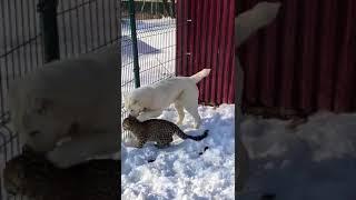 В зоопарке под Владивостоком — очередное чудо природы
