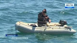 Минтай свел с ума приморских рыбаков
