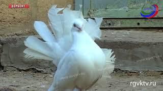 Хозяин самой большой голубятни на Северном Кавказе рассказывает о деле свой жизни