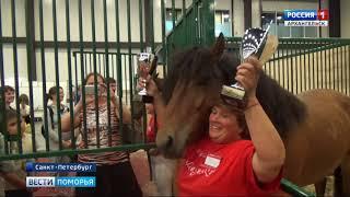 Лучшими в мезенской породе лошадей стали представители Кенозерского парка