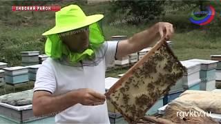 Он знает о меде все! Сакит Шихгасанов занимается пчеловодством более 20 лет