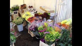 Из Голландии в Самару на фестиваль цветов привезли более 10 тысяч растений