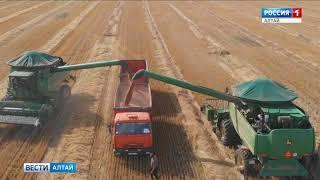 В Алтайском крае фермеры собрали первый миллион тонн зерна