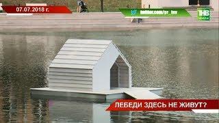 За месяц в Казани погиб второй лебедь - ТНВ