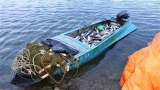 В Белоярском районе рыбаки незаконно поймали сотню нельм и сибирских осетров
