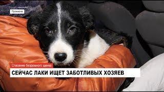 Спасение бездомного щенка