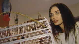 Краснодарский зоомагазин продал одного попугая под видом другого жене футболиста Мамаева