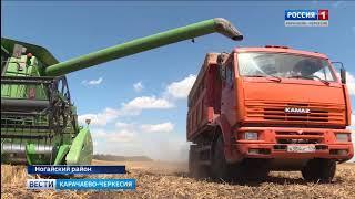 В Карачаево-Черкесии уже начата уборка зерновых