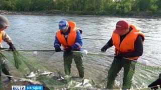 Улов лосося в Магаданской области увеличился в два раза