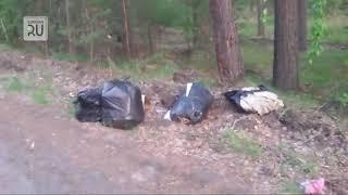 В Кетовском районе не могут месяц убрать 5 мешков с мусором. «Привет Ситникову!» ВИДЕО