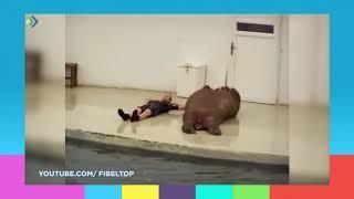 Животные тоже занимаются спортом.Студия 11. 20.09.18